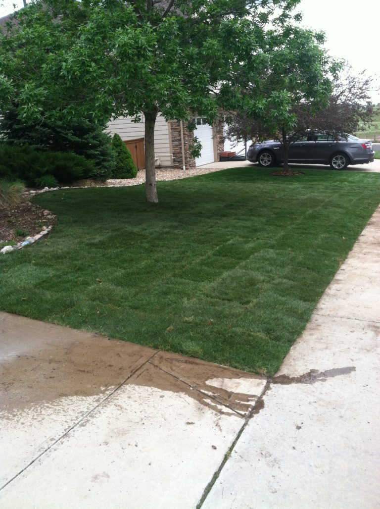 Newly planted sod in the front