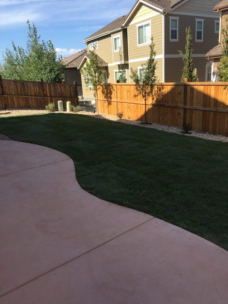 Yard and walkway
