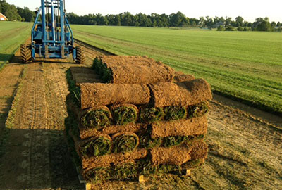 SOD Commercial Services landscaping services Denver Littleton Co
